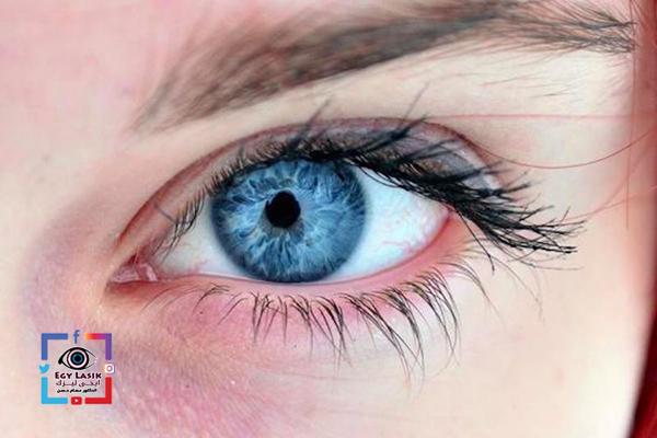 حجم العين