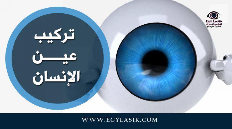 eyes parts