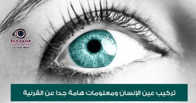 cornea and contact lenses