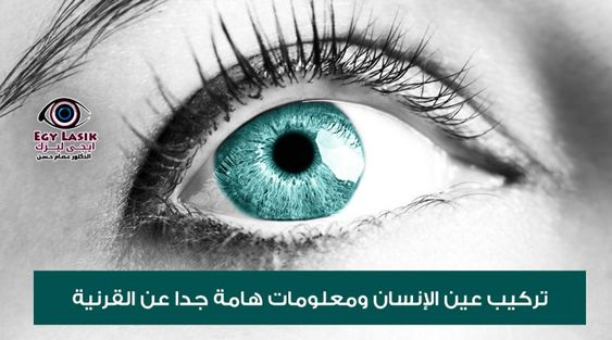 cornea and contact lenses